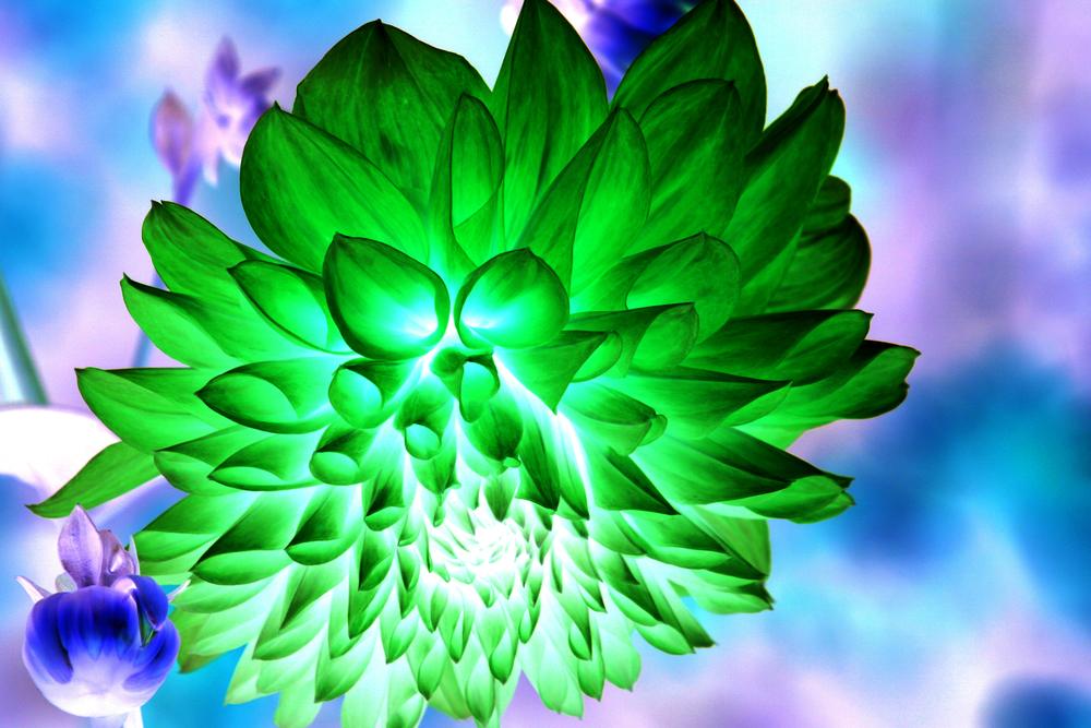invertflower2.jpg