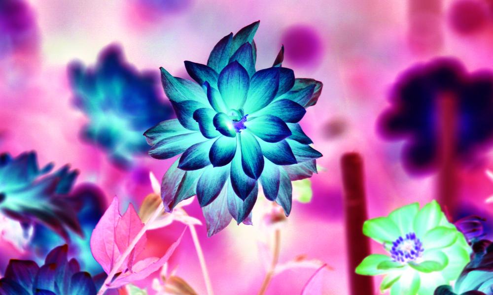 pinkblue.jpg