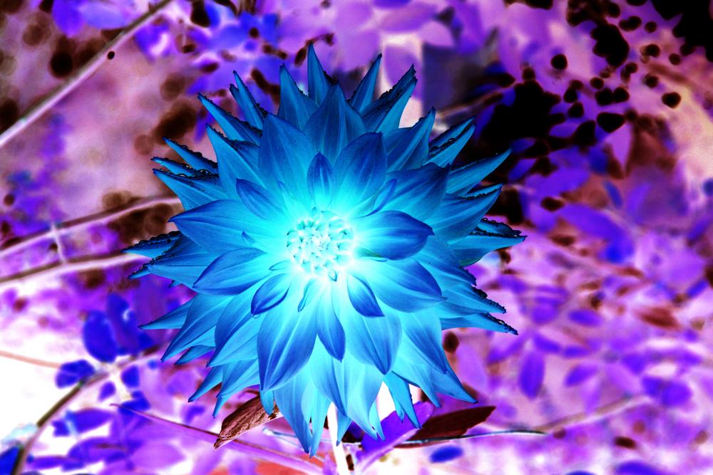 purpblue.jpg