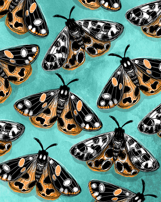 Tiger Moths - Erin Clark - 555.jpg
