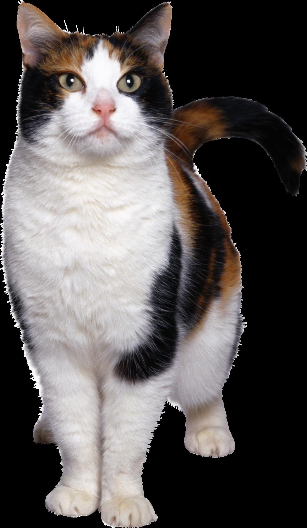 cat_PNG113.png