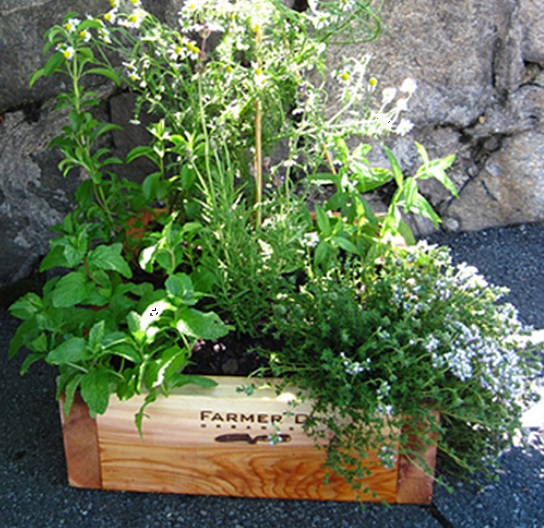 counter top garden herb box