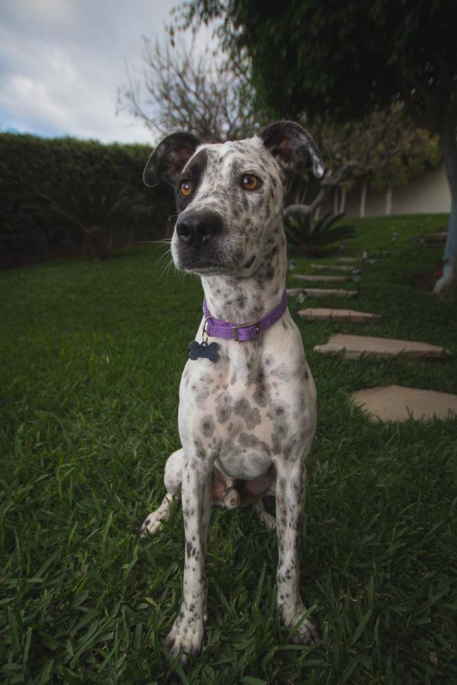 20140303 Fotos perros 0022.jpg