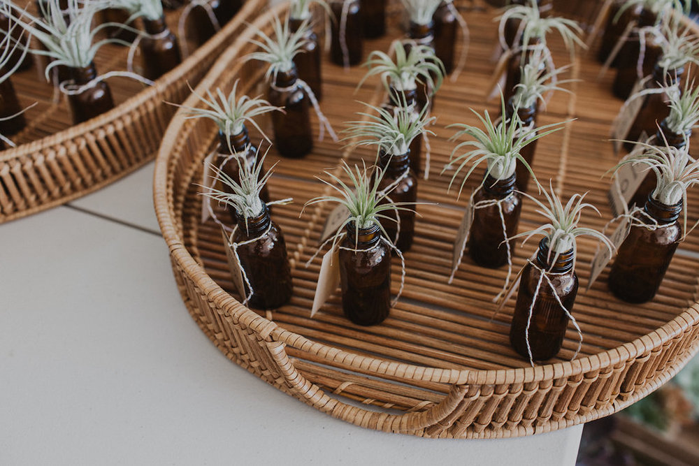 Air plants as wedding favors and escort cards.