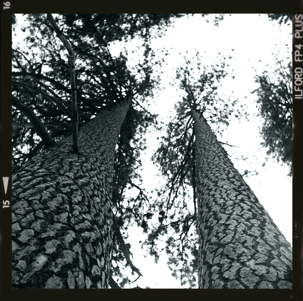NOV13_B&W_TREES_W BORDER.jpg