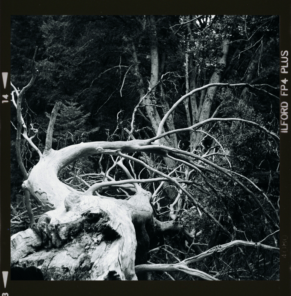 NOV13_B&W_TWISTED TREE_W BORDER.jpg