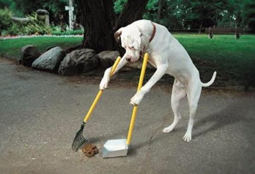 PoopScoop.jpg