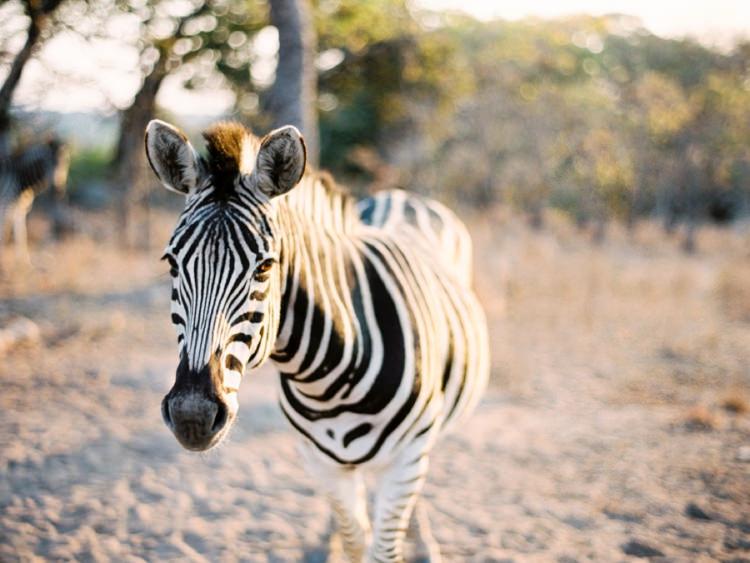 Fine Art Film Photographer Africa Safari Elopement_0005.jpg