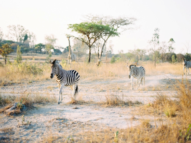 Fine Art Film Photographer Africa Safari Elopement_0024.jpg