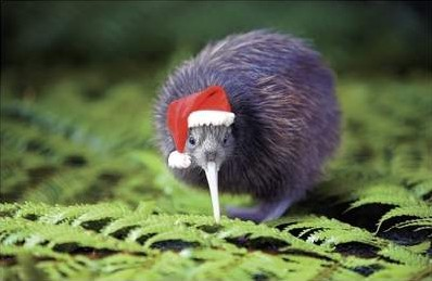 They don't have snow for Christmas, but the Kiwi's make do on spirit...