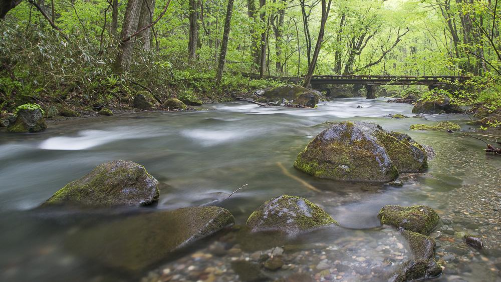 Lightstone Images, LLC, Goldsboro NC, Photographer