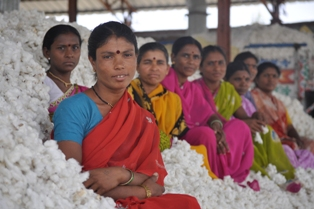 Women holding cotton 2 Chetna.jpg