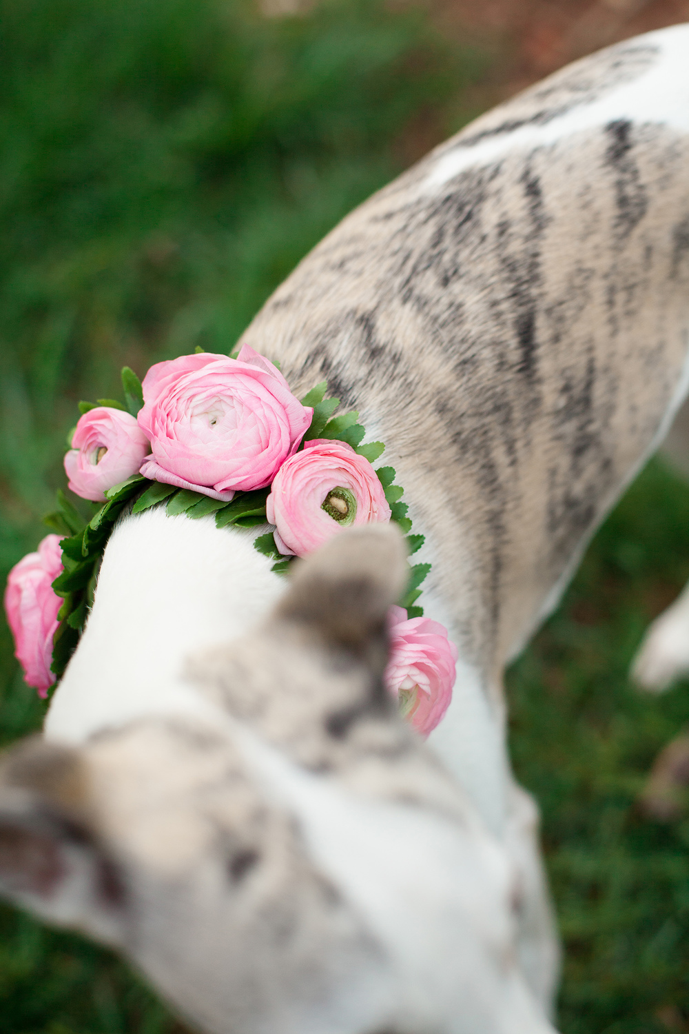 Pink Floral Collar Inspiration for Puppies at Weddings