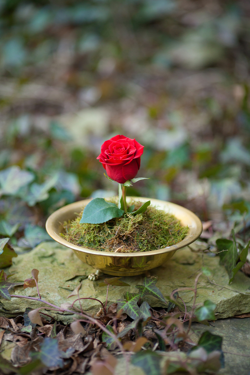 Red Rose in a Gold Bowl Styled by Eclectic Sage