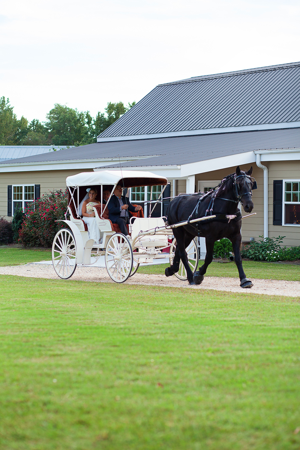 Bride Entering in a Horse Drawn Carriage
