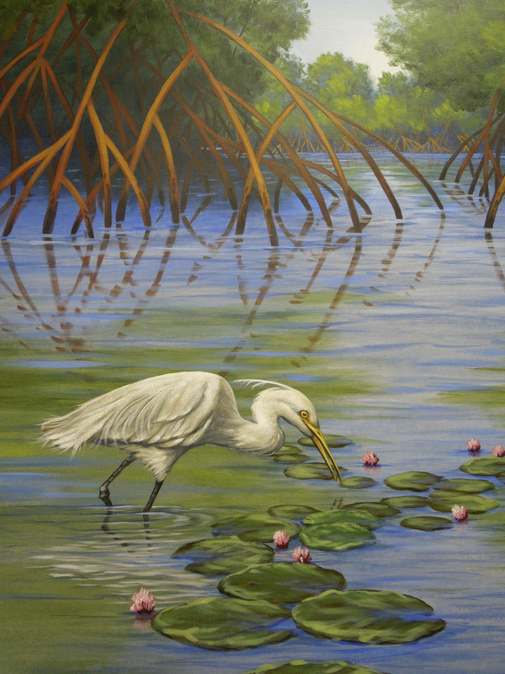 Florida Mangroves