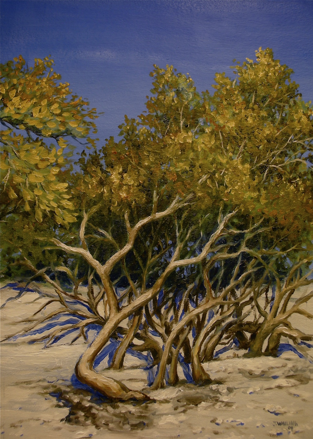Gnarled Beach Trees