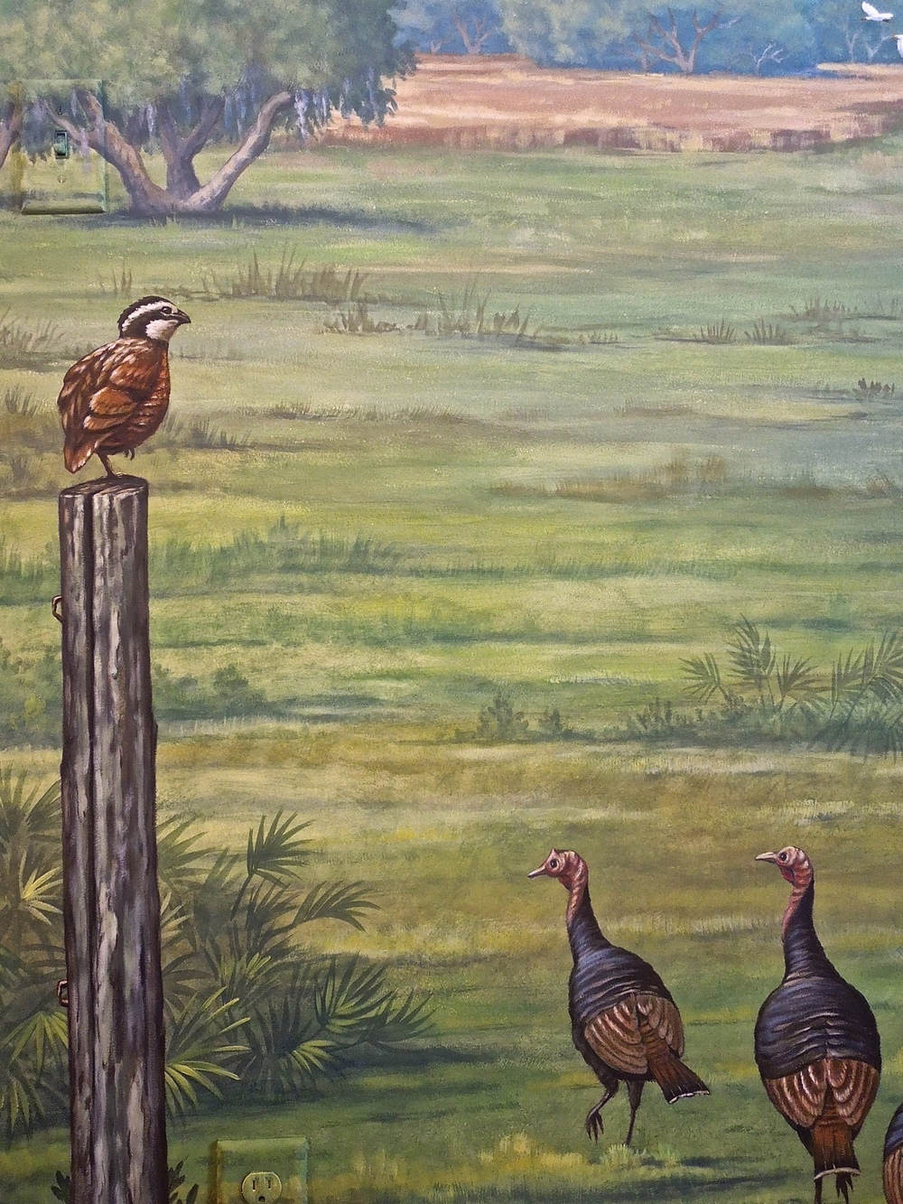 Florida Ranch, Fowl