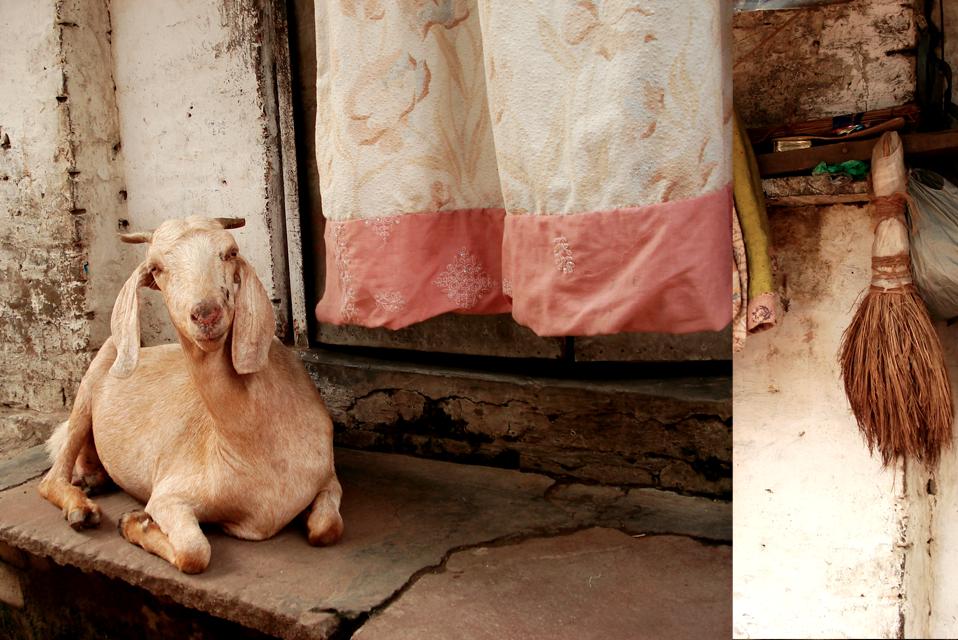 Goat3.png