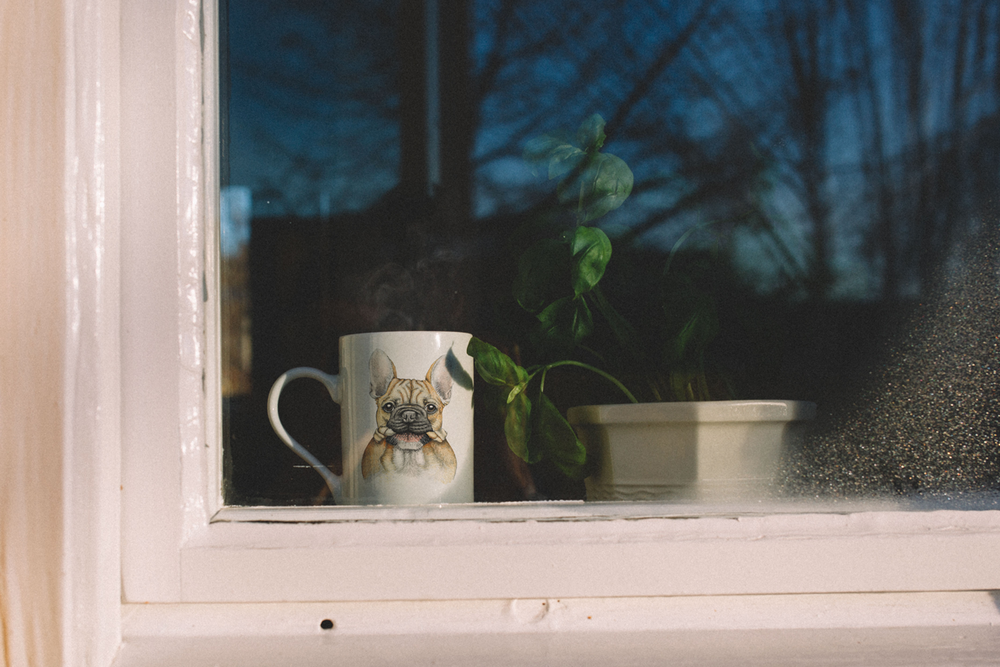 French-bulldog-mug-in-window