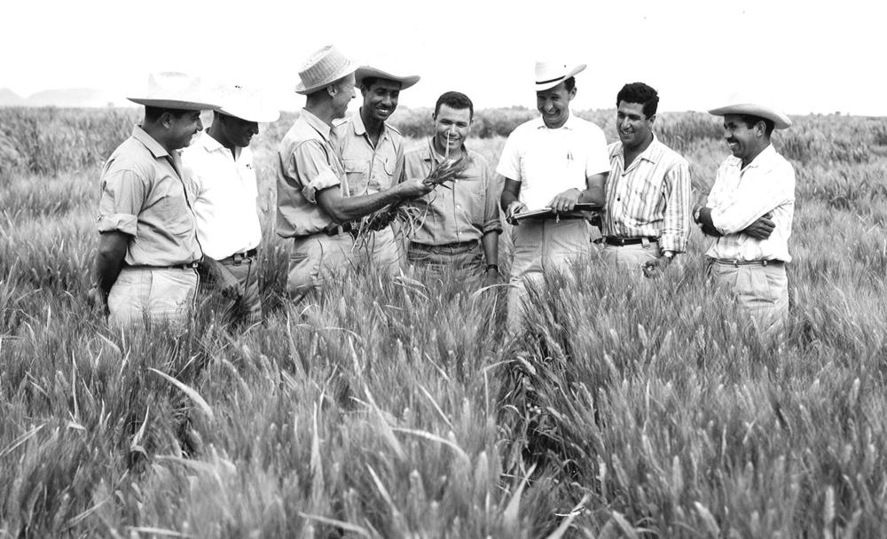 Dr. Borlaug in his fields in Mexico.  CIMMYT Photograph.