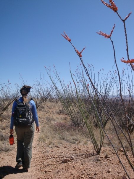 Hiking through an ocatillo forest in the Sonora Desert near Tucson, Arizona.