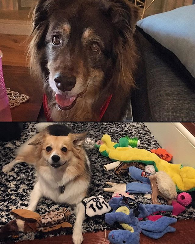 Happy National Dog Day! I love my Tedster & Squeevee!