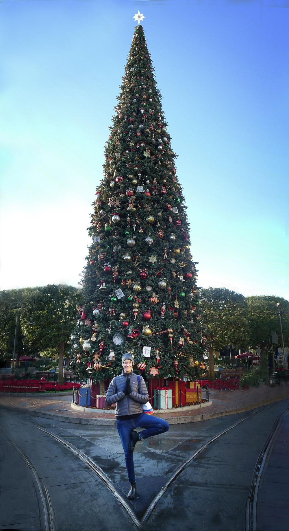 CHRISTMAS TREE POSE.jpg
