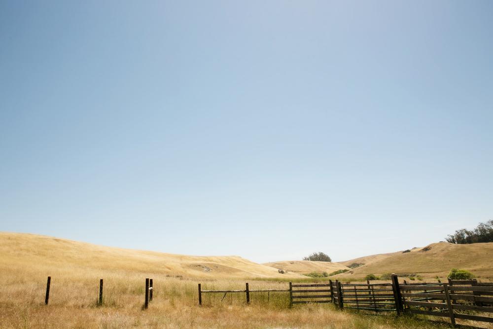 Marin County gorgeousness. Photo:  Julie Mikos Houlihan