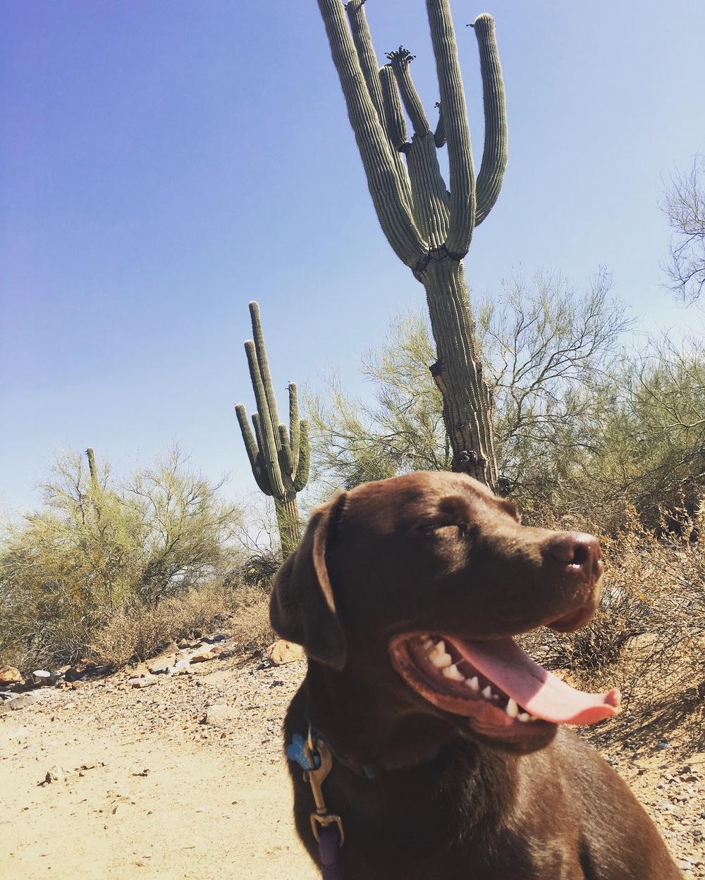Desert pup.