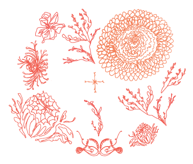 Flower Illustrations, potentially to be used in design either individually or as a pattern