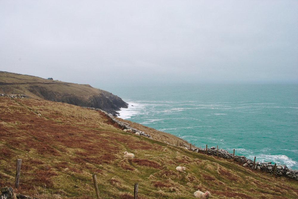 """Sheep vs. Sea""   Dingle, Ireland || April 2014 || Nikon D3000"