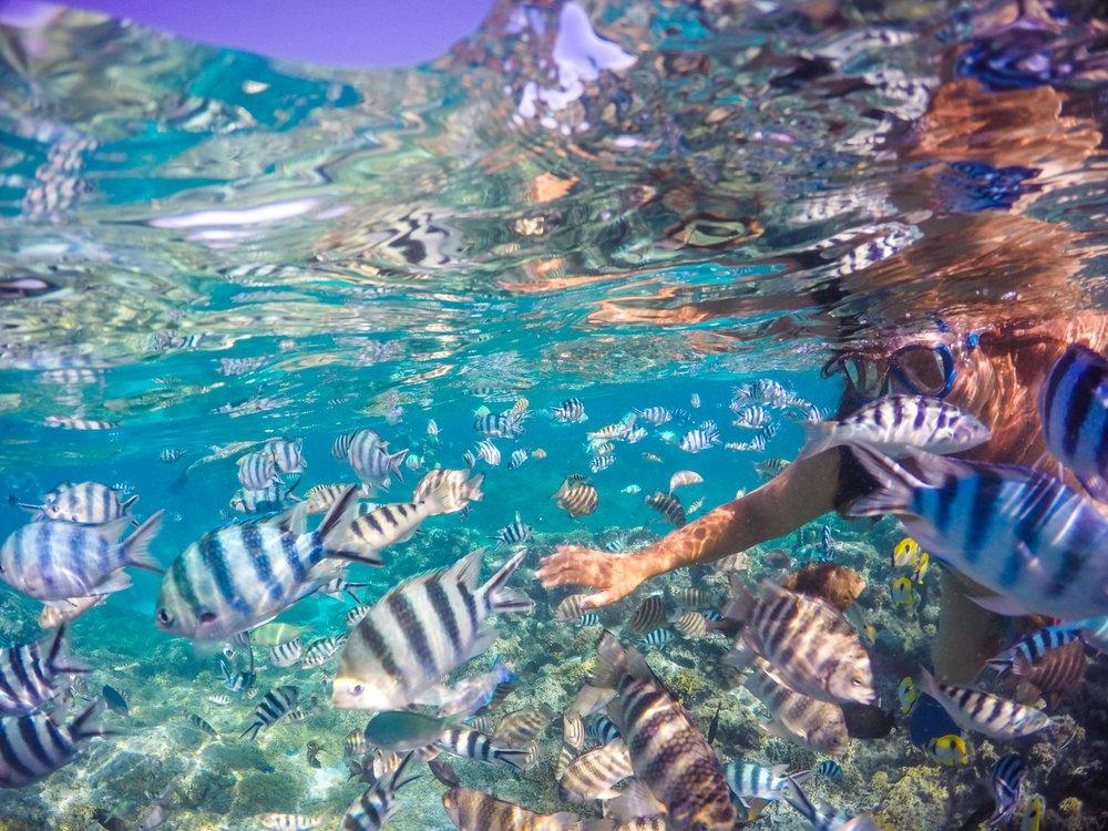 Bora Bora_GoPro-0586.jpg