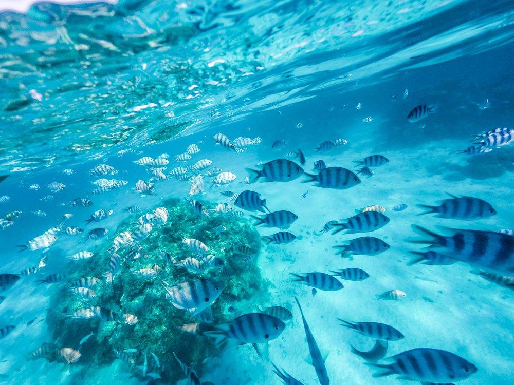 Bora Bora_GoPro-0525.jpg