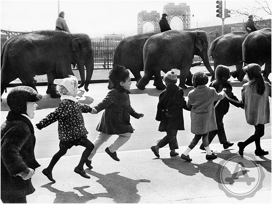 1029 Circus Elephants and Schoolkids HOMEPAGE (Gallery).jpg