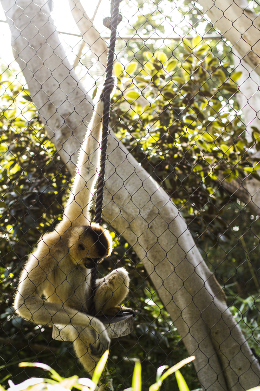 Sad Monkey.jpg