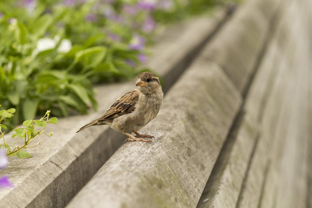 Bench Bird 1.jpg