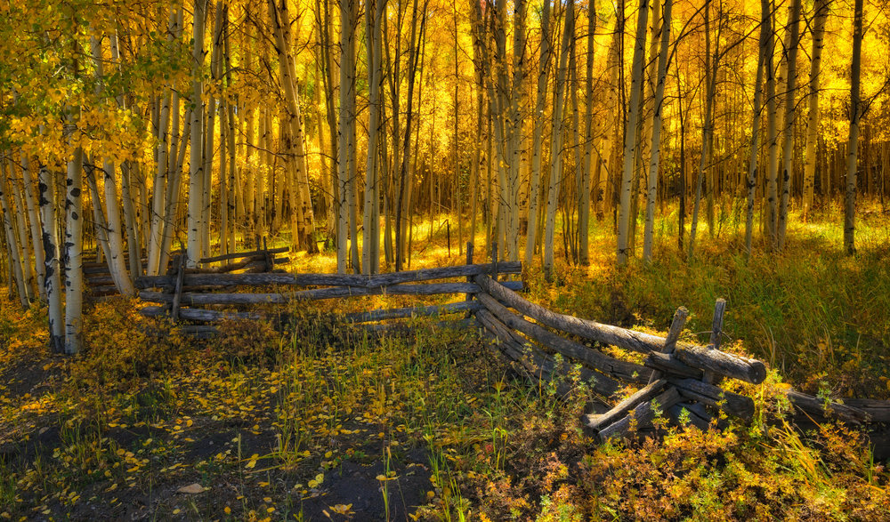 ©Doug Bennett Photography - Aspen Fence
