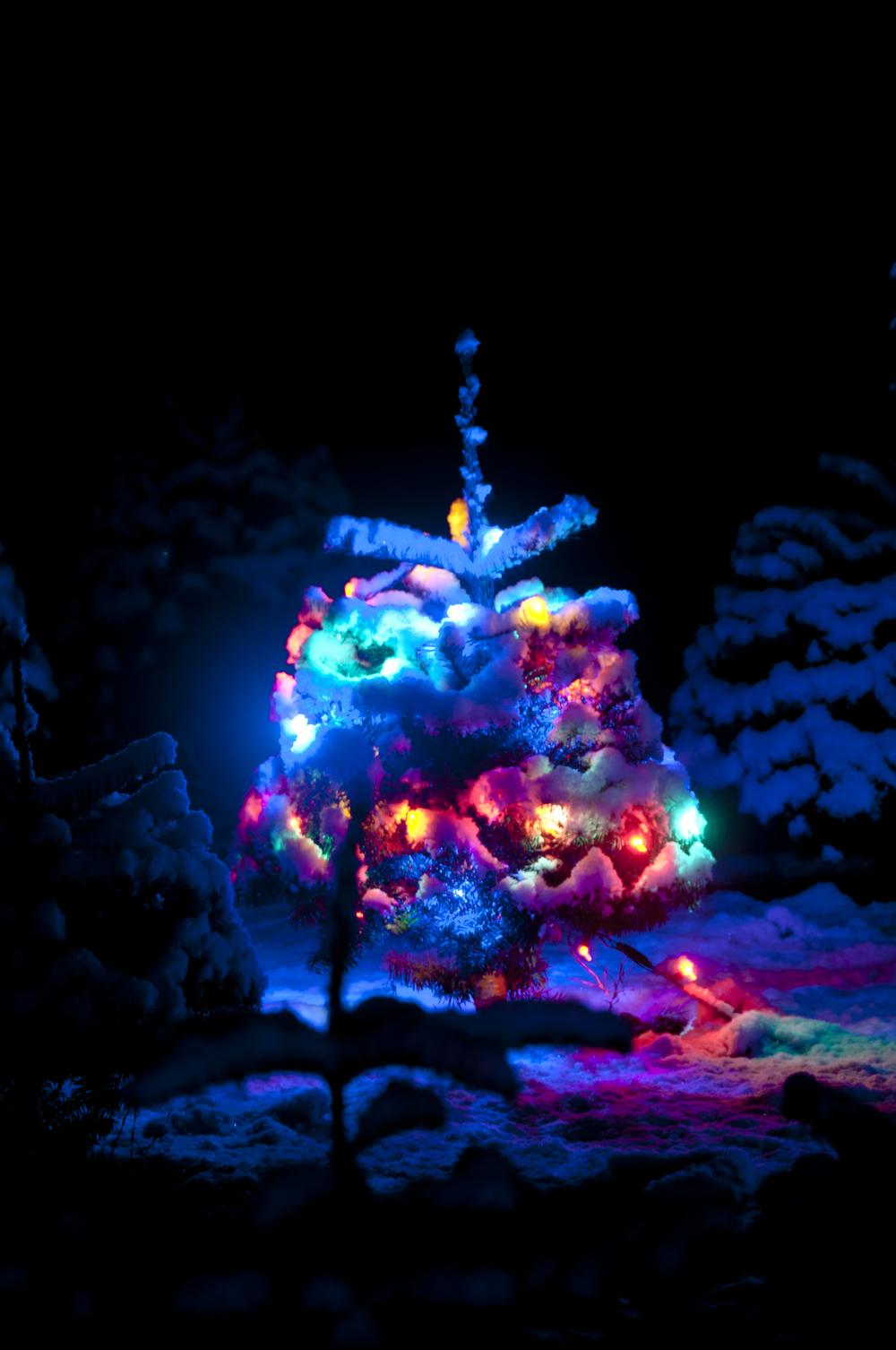 Lighted Snowy Christmas Tree