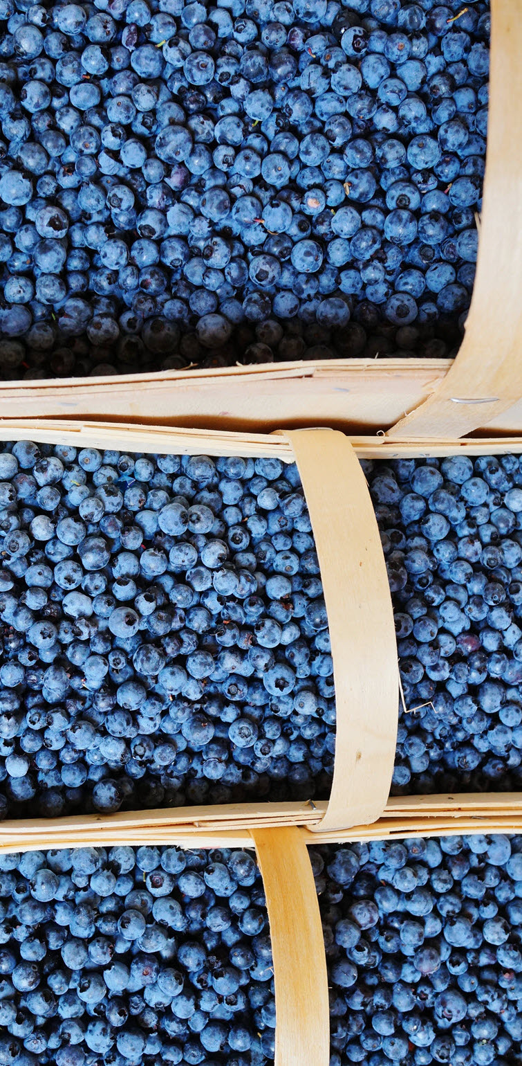 Jean-Talon-Market-1-blueberries-1540.jpg