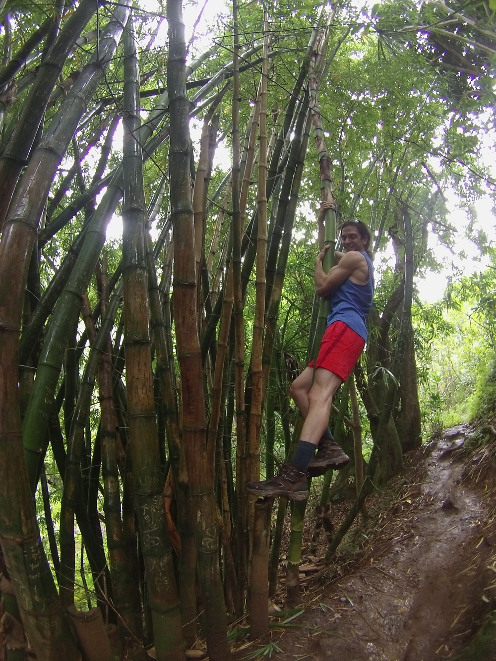 climbing a bamboo tree, just because