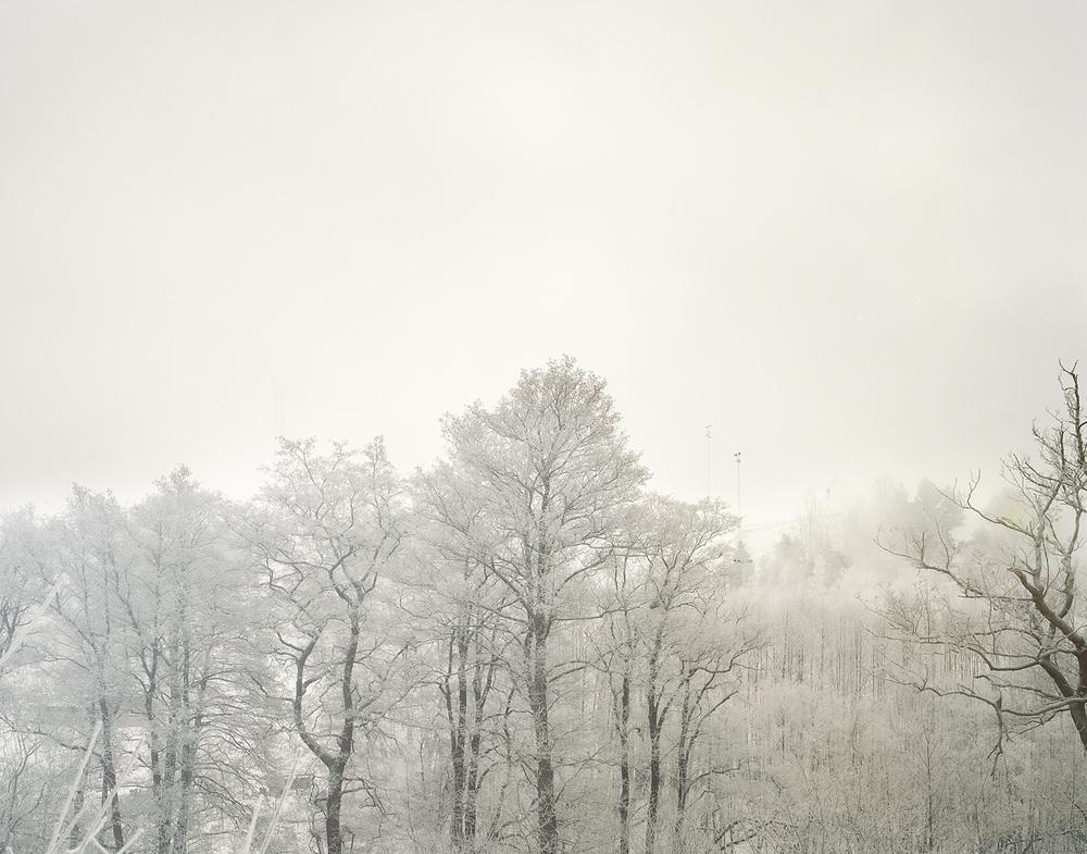 Snowtree copy.jpg