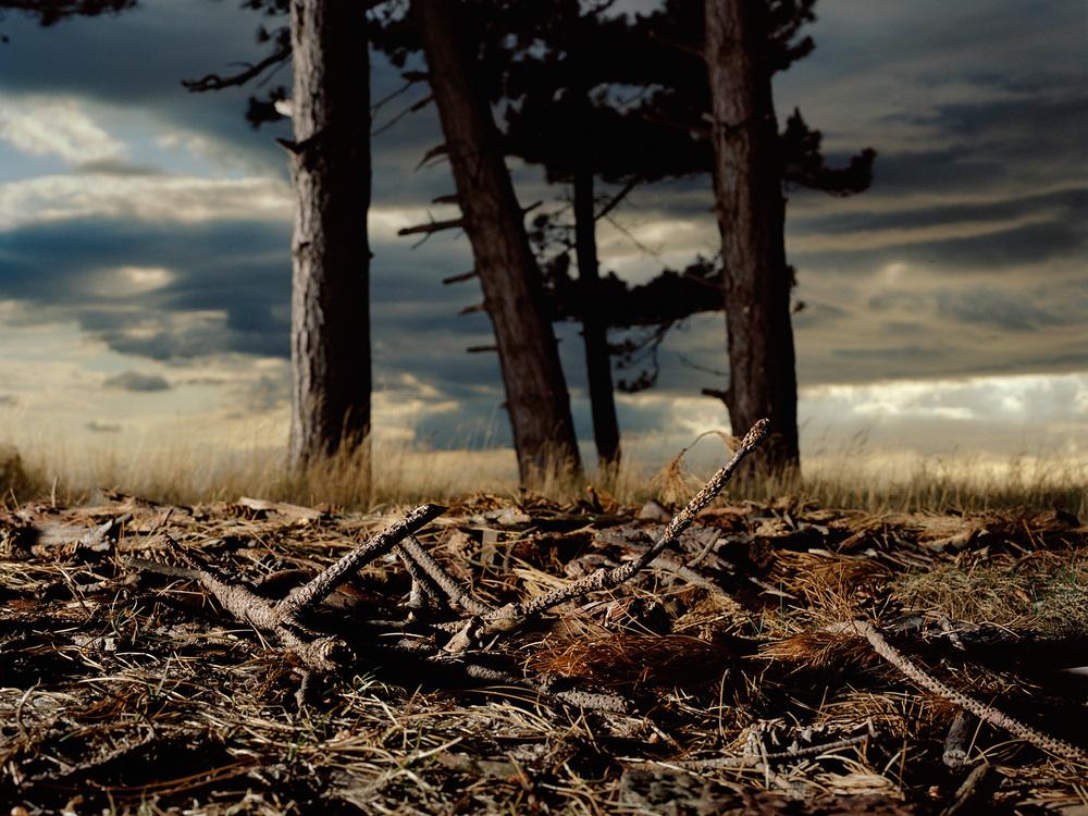 grenar på marken copy.jpg