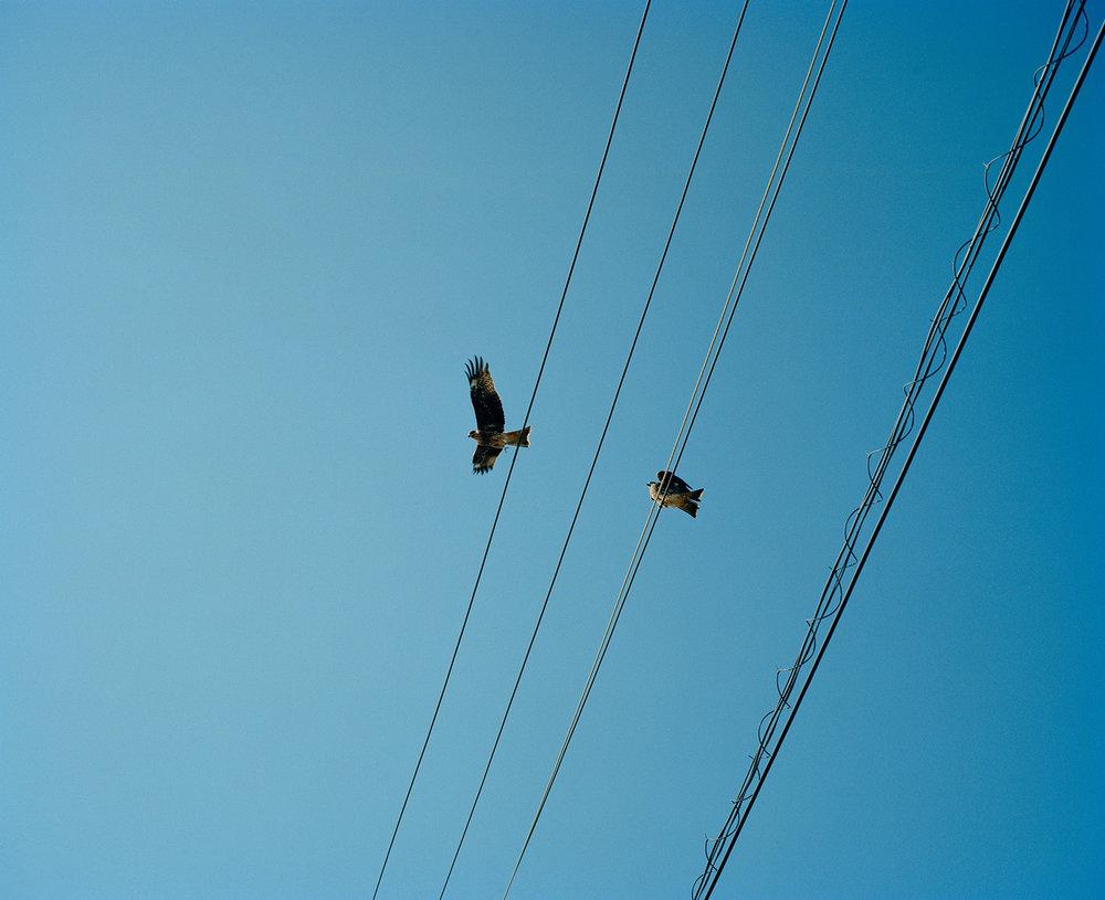 Birds copy.jpg