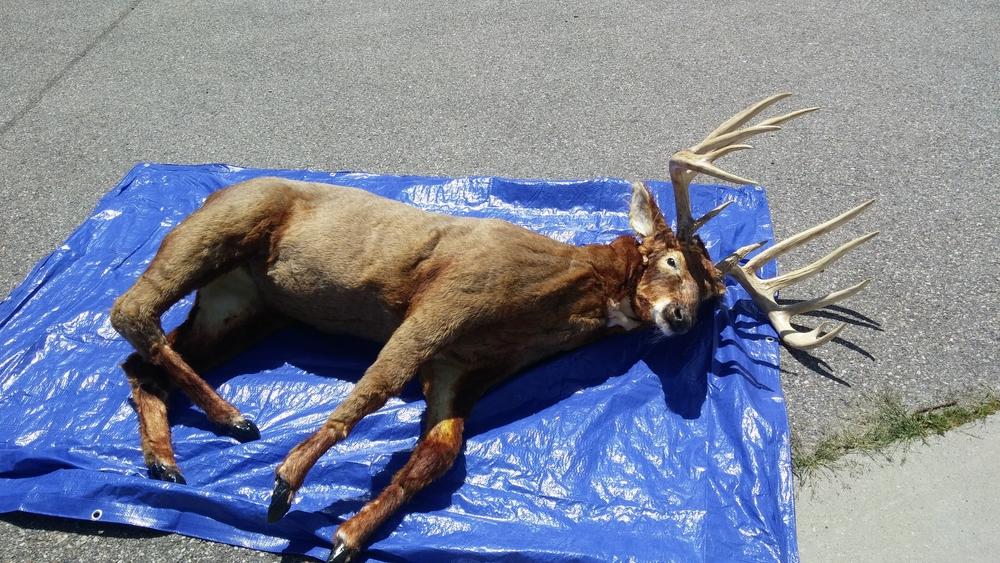 Deer-Monolith 2015.JPG