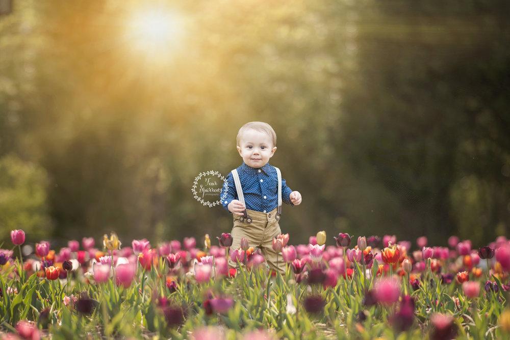 Tulip 9@0,75x.jpg2.jpg