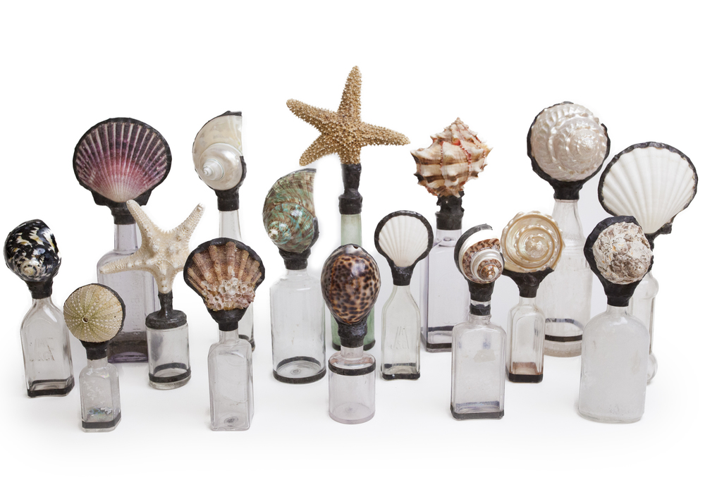SHELL BOTTLE COLLECTION sugg. retail $58.00 to $228.00