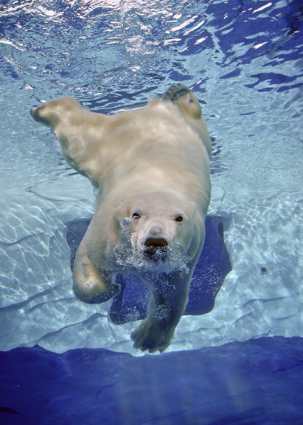 PolarBear06-APweb.jpg