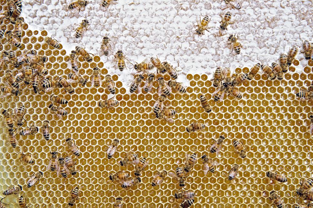 Bees1WEB.jpg