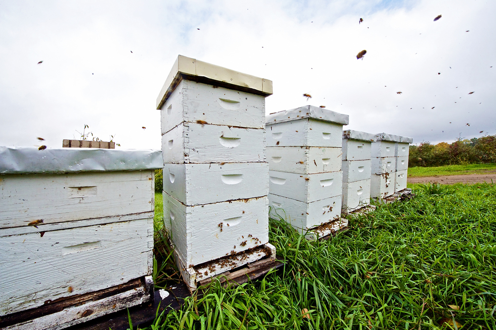 Bee Hives; honey bees; wood; orchard; apple; michigan; pure; insects; animal; nature; photography; photographer; fly; grass; plants; pollen; polination
